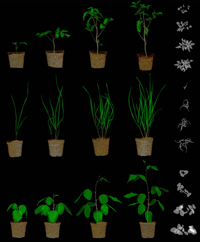 Image of plants as sensors that can identify chemical and biological threats in the environment